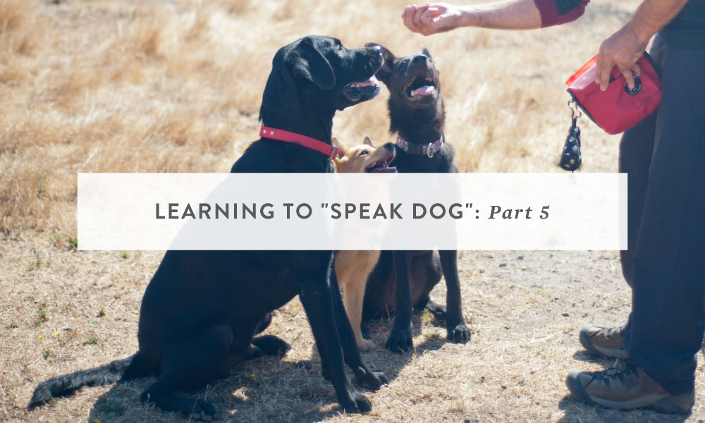 Learning to Speak Dog Part 5: Communication and Training