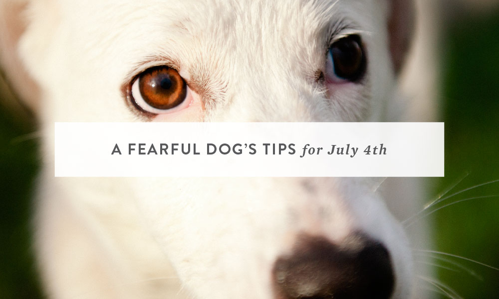 A Fearful Dog's Tips for July 4th