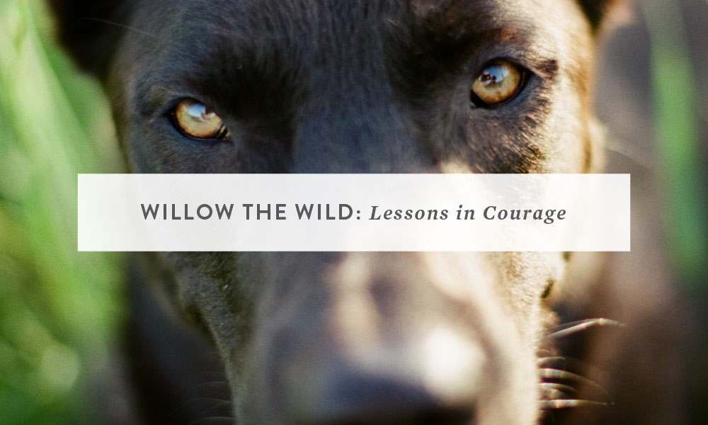 Willow the Wild: Lessons in Courage from a Fearful Dog