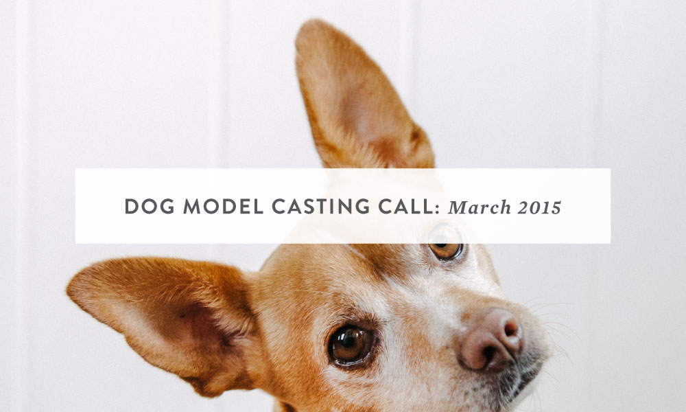 Dog Model Casting Call : San Francisco, Bay Area