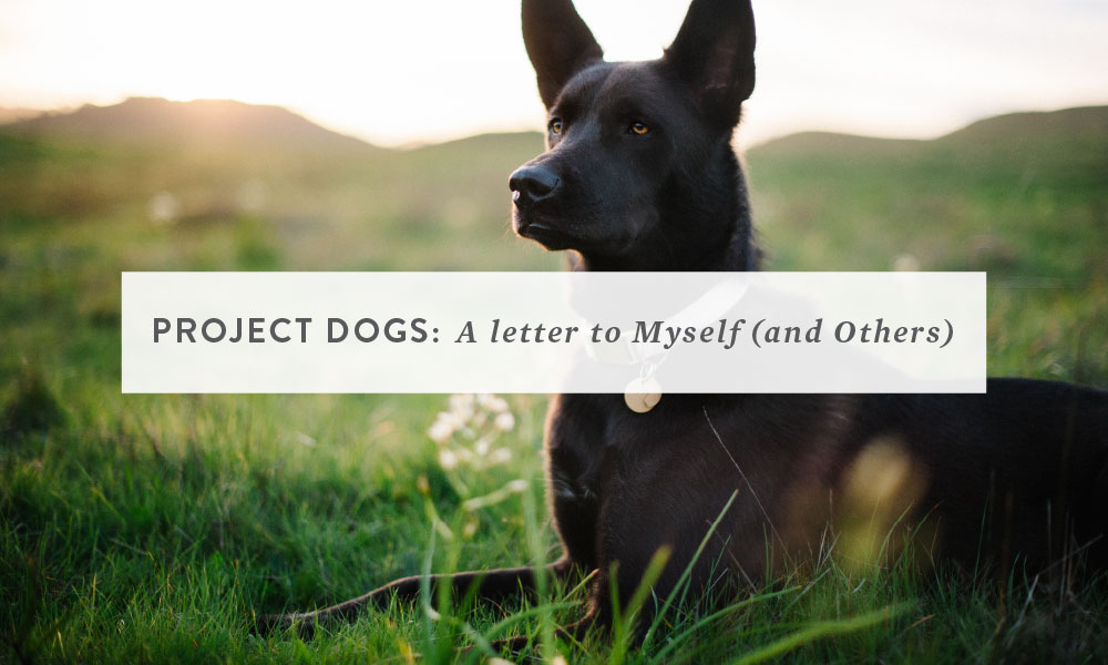 Project Dogs: A Letter to Myself (and Others)