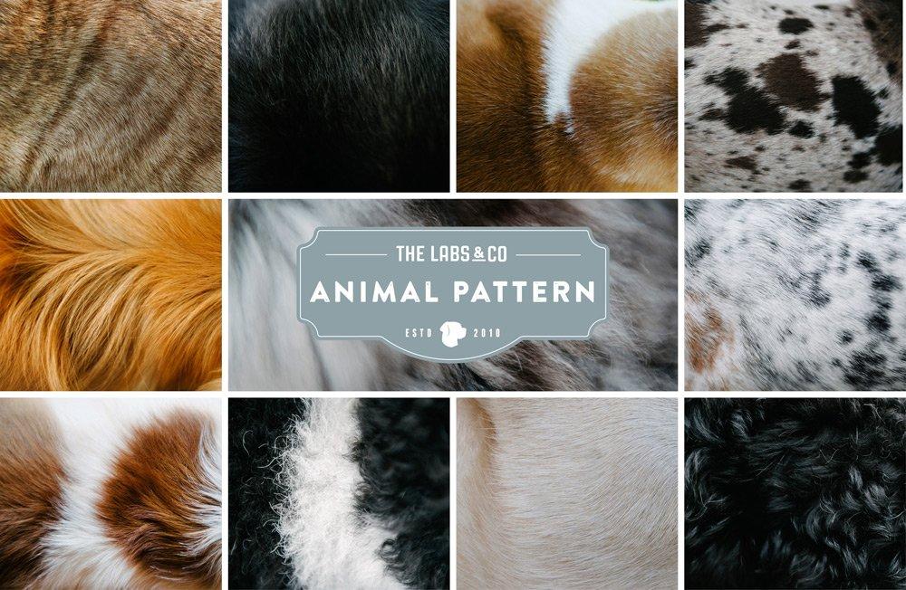 AnimalPattern_group