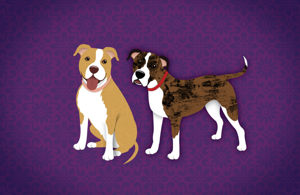 DogsIllustrated_layout8