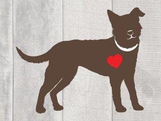 Seattle Pet Project