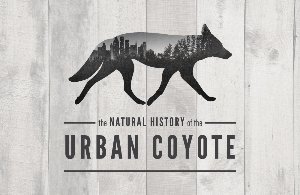coyote_layout2