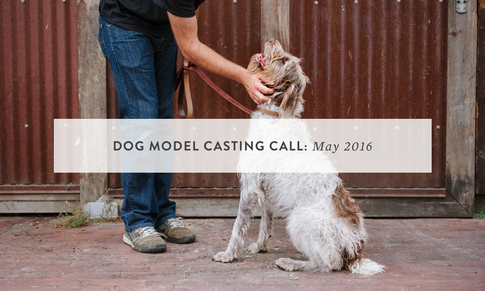 Dog Model Casting Call: San Francisco, Bay Area
