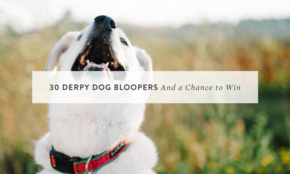 30 Derpy Dog Bloopers and a Chance to Win