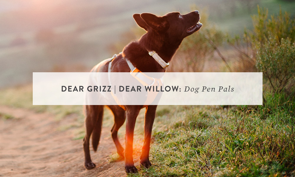 Dear Grizz | Dear Willow: the beginning of a beautiful friendship