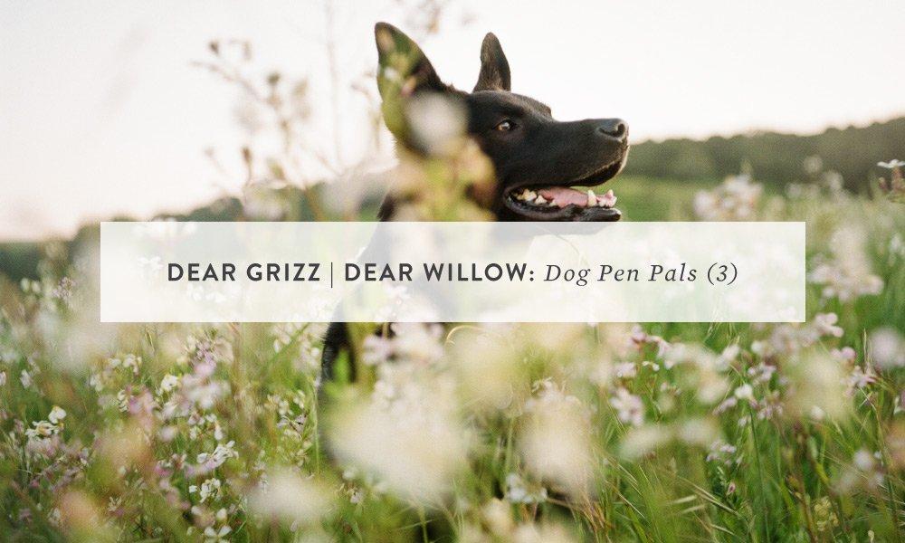 Dear Grizz | Dear Willow: Letter 3