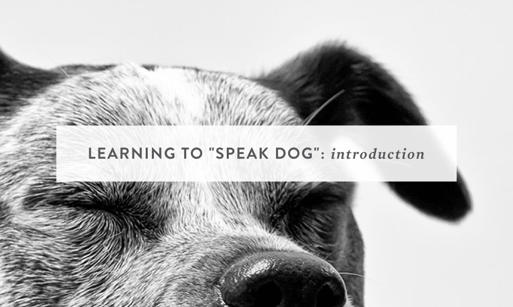"Learning to ""Speak Dog"": A Canine Behavior Series"