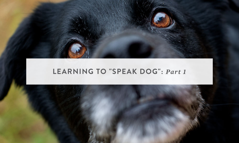 "Learning to ""Speak Dog"" Part 1: Why You Should Care About Understanding Your Dog"
