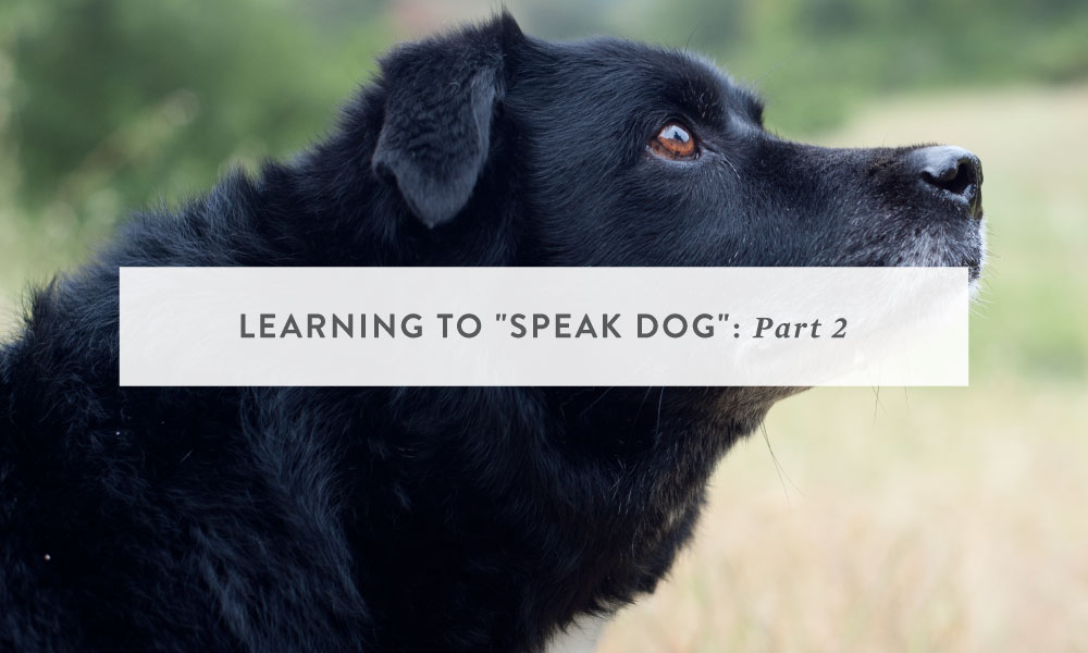 "Learning to ""Speak Dog"" Part 2: Space, The Forgotten Frontier"