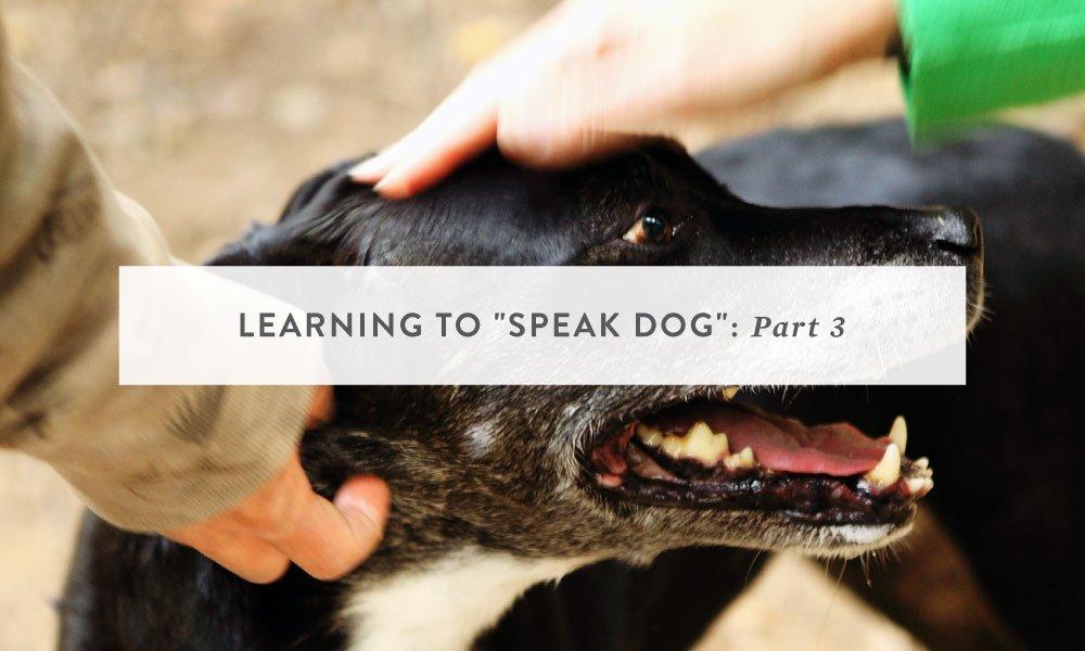 Learning to Speak Dog Part 3: Trust