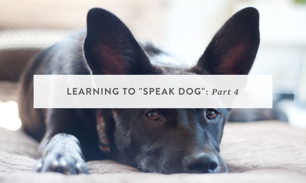Learning to Speak Dog Part 4: Reading a Dog's Body