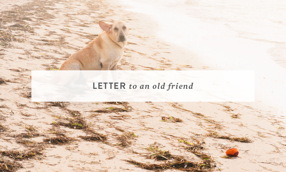 Letter to an Old Friend