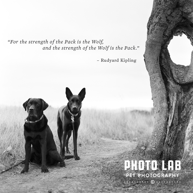 strength_of_the_wolf