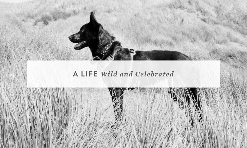 A Life, Wild and Celebrated