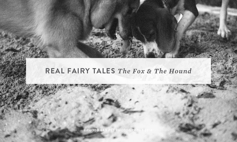 Real Fairy Tales: The Fox and the Hound
