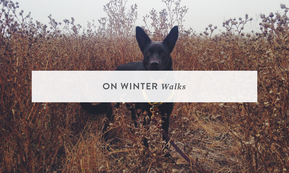 On Winter Walks