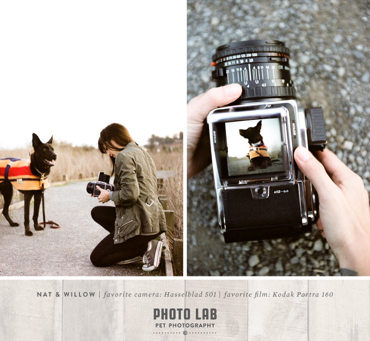 BLProject_favorite_cameras_Nat