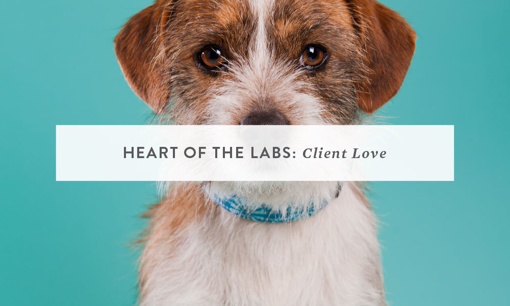 Client Love: Heart of The Labs