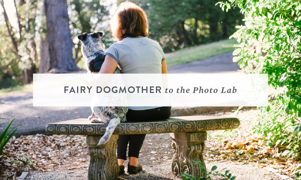 Fairy Dogmother to The Photo Lab