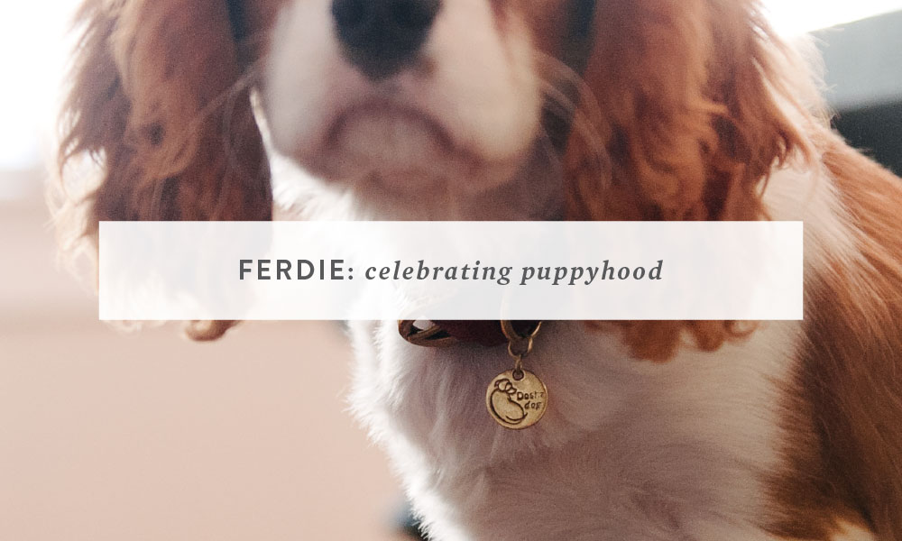 Ferdie, Celebrating Puppyhood | Bay Area Dog Photography