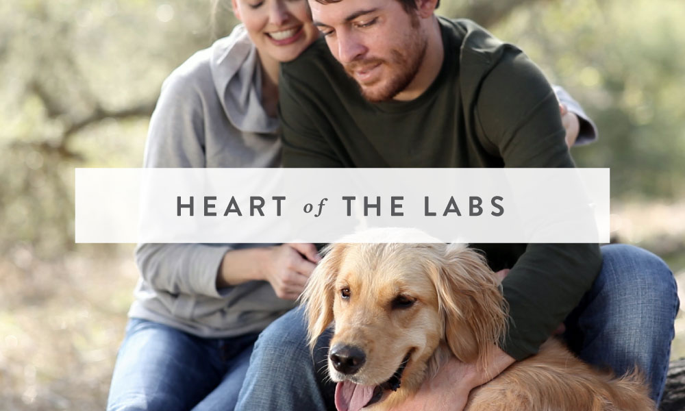 VIDEO: Heart of The Labs