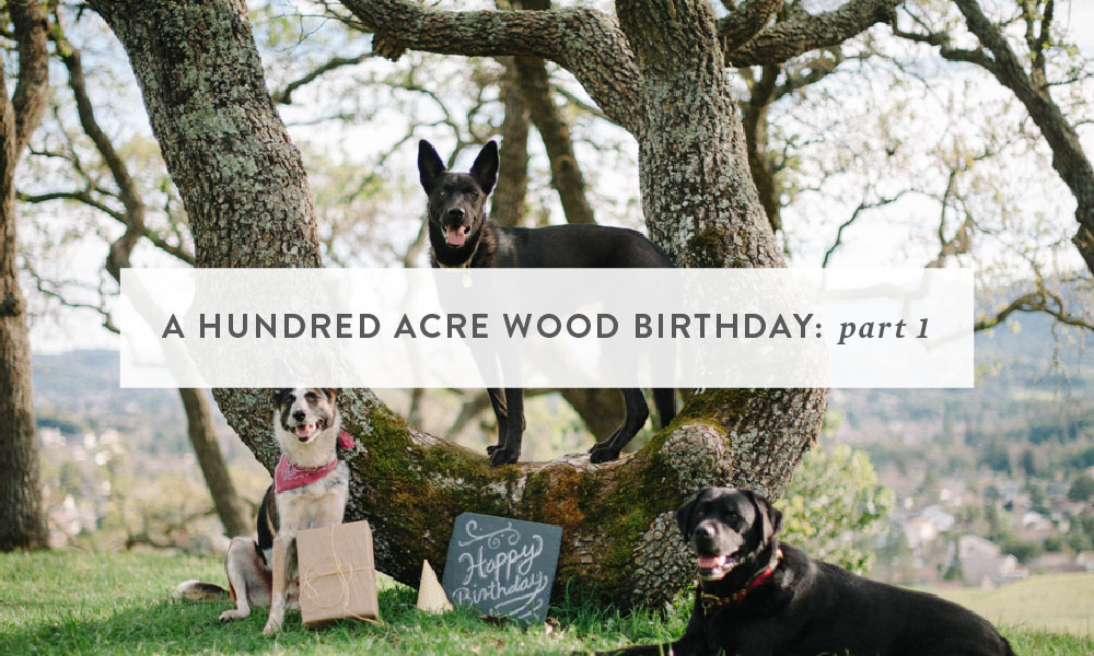 Themed Photoshoot : A Hundred Acre Wood Birthday (part 1)