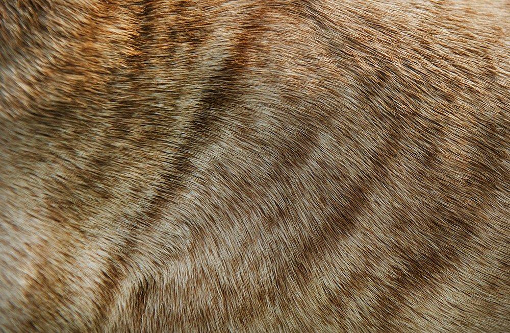 AnimalPattern_layout1