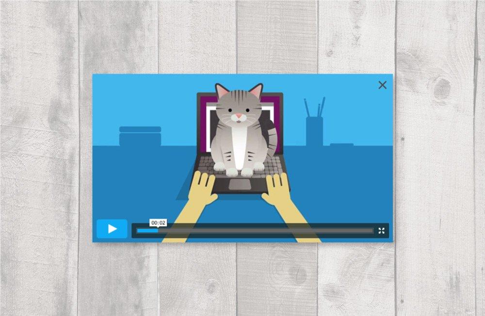 Catstarter_layout4
