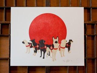 Co+LAB: Search & Rescue Dogs