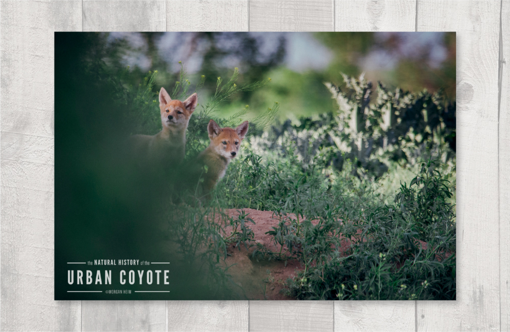 coyote_layout4