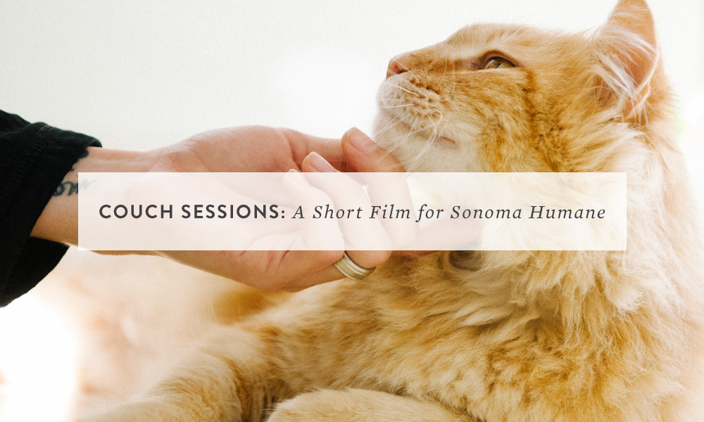 From the Animal Shelter to the Couch: a short film