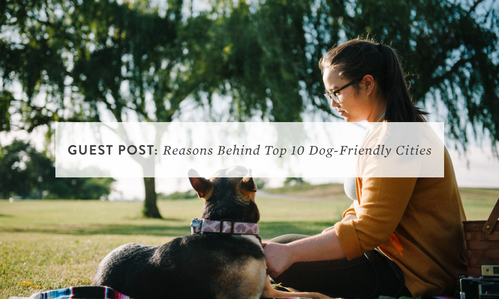 Reasons Behind Those Top 10 Dog-Friendly Cities In The US