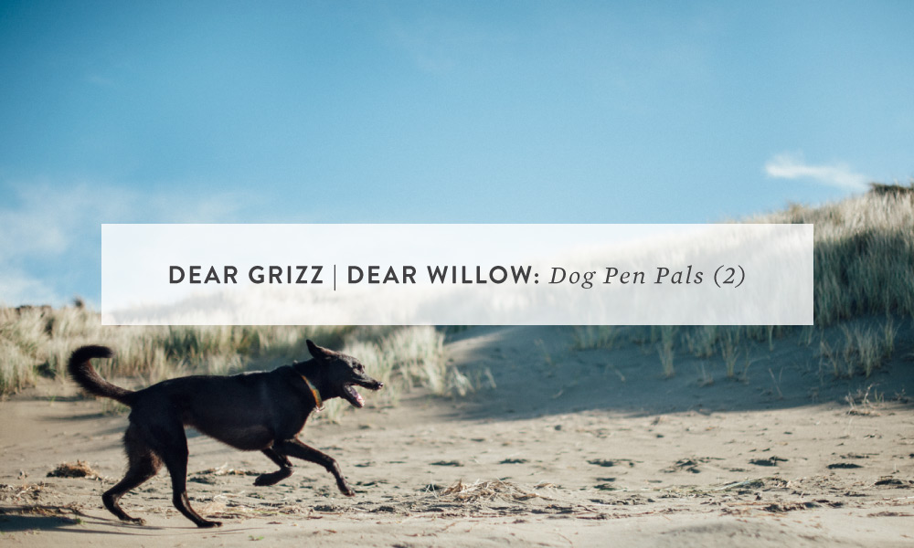 Dear Grizz | Dear Willow: Letter Two
